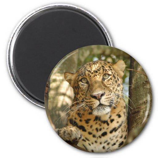 LeopardCheetaro013 Iman De Frigorífico