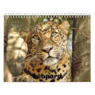 LeopardCheetaro013, Leopard Calendar