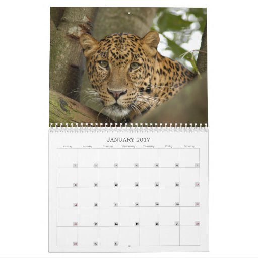 LeopardCheetaro013, Leopard Cheetaro Calendar