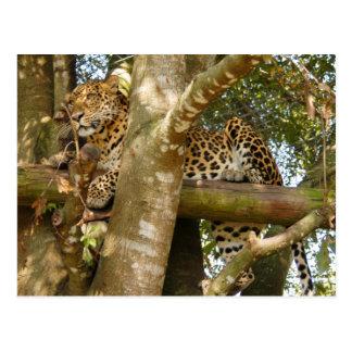 LeopardCheetaro014 Postcard