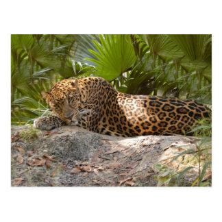 LeopardCheetaro017 Postcard