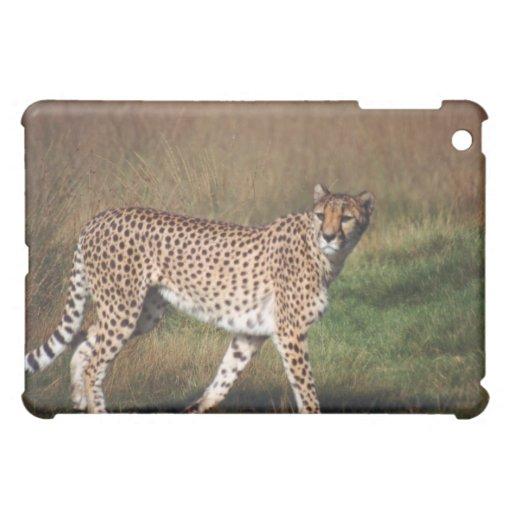 leopardo 3