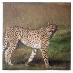 leopardo 3 azulejo cuadrado grande