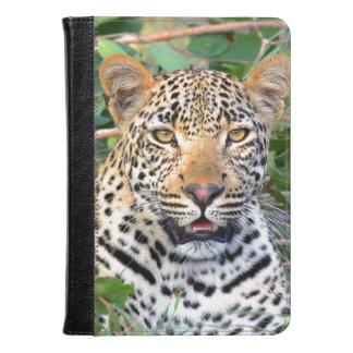 Leopardo 6