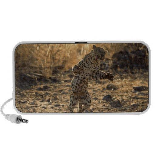 Leopardo africano en las piernas traseras, altavoces