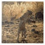 Leopardo africano en las piernas traseras, azulejo cuadrado grande