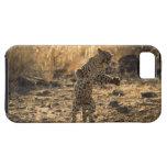 Leopardo africano en las piernas traseras, iPhone 5 funda