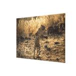 Leopardo africano en las piernas traseras, Namibia Impresiones En Lona