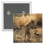 Leopardo africano en las piernas traseras, pin cuadrado