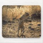 Leopardo africano en las piernas traseras, tapete de raton