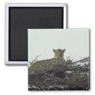 Leopardo africano imán cuadrado