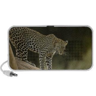 Leopardo africano, pardus del Panthera, en un árbo Altavoz De Viaje