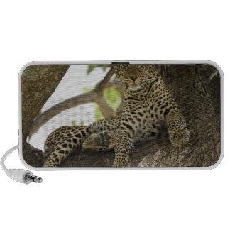 Leopardo africano, pardus del Panthera, en un árbo Mini Altavoces