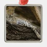 Leopardo africano, pardus del Panthera, en un Ornamentos De Navidad