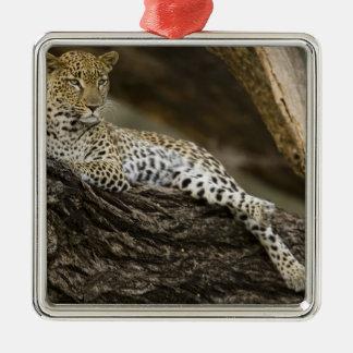 Leopardo africano, pardus del Panthera, en un Adorno Cuadrado Plateado
