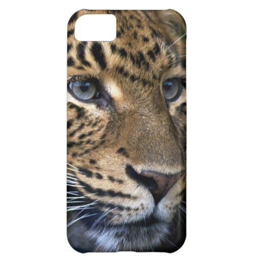 Leopardo chino