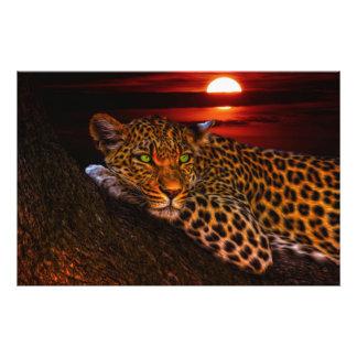Leopardo con puesta del sol fotografía