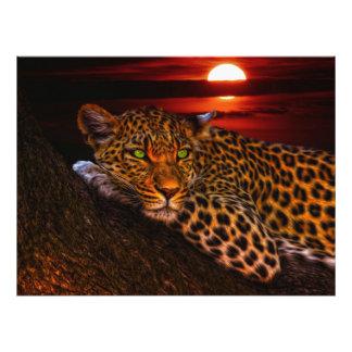 Leopardo con puesta del sol fotografías
