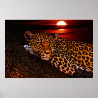 Leopardo con puesta del sol póster