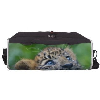 Leopardo Cub de Amur Bolsa Para Ordenador