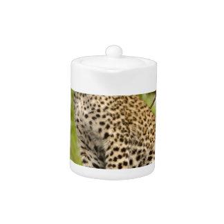 Leopardo Cub en un miembro