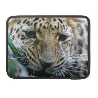 """Leopardo de Amur 11"""" manga de MacBook Funda Para Macbook Pro"""