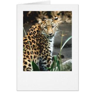 Leopardo de Amur Tarjeta De Felicitación