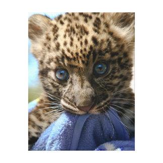 Leopardo del bebé con la manta azul lona estirada galerias