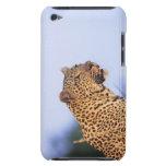 Leopardo del varón adulto (pardus del Panthera) Funda iPod