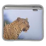 Leopardo del varón adulto (pardus del Panthera) Mangas De iPad