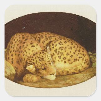 Leopardo el dormir, 1777 (esmalte en la galleta pegatina cuadrada