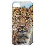 Leopardo el mirar fijamente