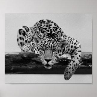 Leopardo en blanco y negro póster