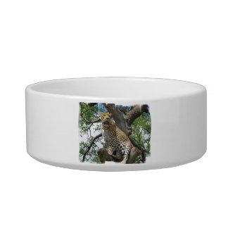 Leopardo en cuenco del mascota del árbol tazón para gato