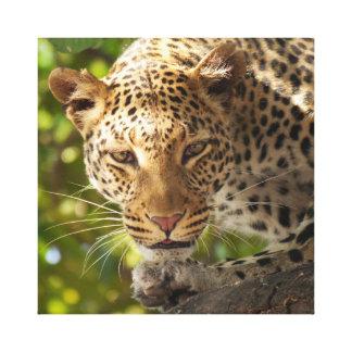 Leopardo en un árbol impresiones de lienzo