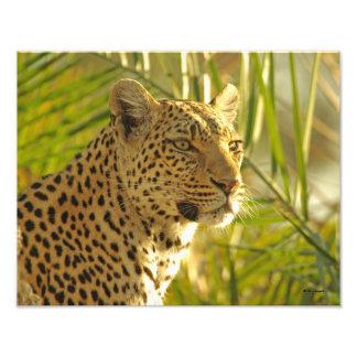 Leopardo entre hojas de palma fotografías