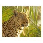 Leopardo entre hojas de palma impresion fotografica