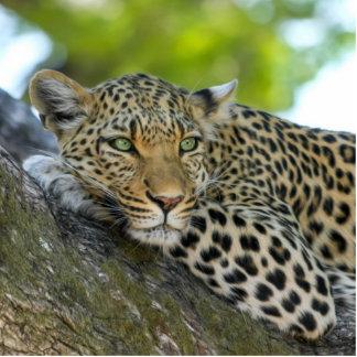 Leopardo Escultura Fotografica