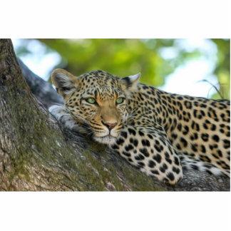 Leopardo Escultura Fotográfica