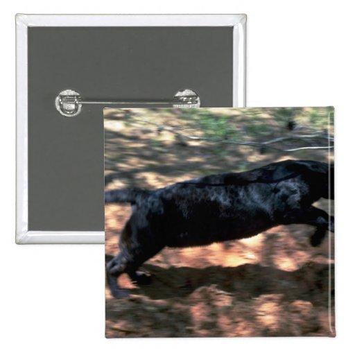 Leopardo, fase negra pins
