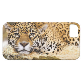 Leopardo iPhone 5 Coberturas