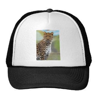 Leopardo Gorros Bordados