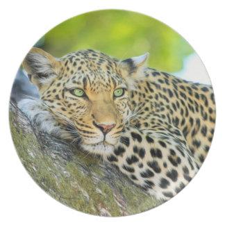 Leopardo hermoso con los ojos verdes platos para fiestas