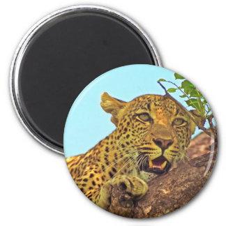 Leopardo Imán Para Frigorifico