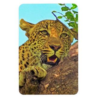 Leopardo Imán De Vinilo