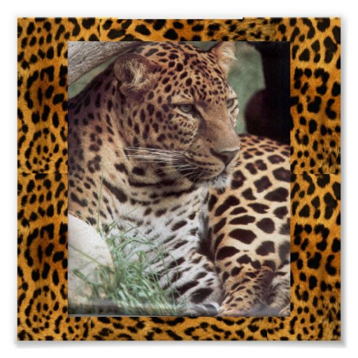 Leopardo indio póster