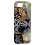 Leopardo iPhone 5 Cobertura