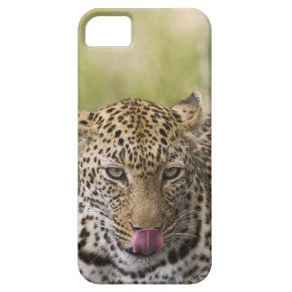 Leopardo iPhone 5 Fundas