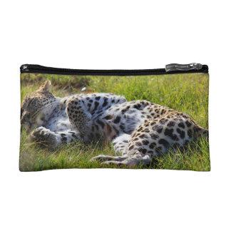 Leopardo juguetón