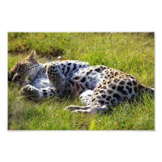 Leopardo juguetón cojinete